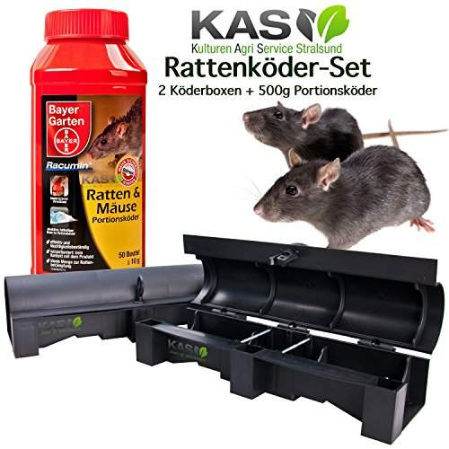 ratten bekaempfen