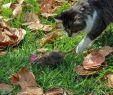Ratten Im Garten Bekämpfen Frisch Ratten Im Garten & Kompost Vertreiben Tipps Zur Bekämpfung
