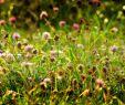 Ratten Im Garten Erkennen Reizend Gebrauchsrasen Kräuterrasen Rsm 2 4 Mit Kräuteranteil 2 Kg