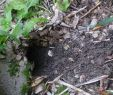Rattenlöcher Im Garten Schön Im Garten Löcher Ratten