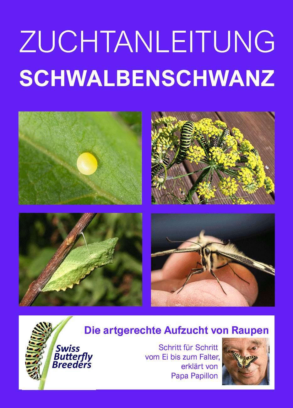 Schwalbenschwanz Titelbild