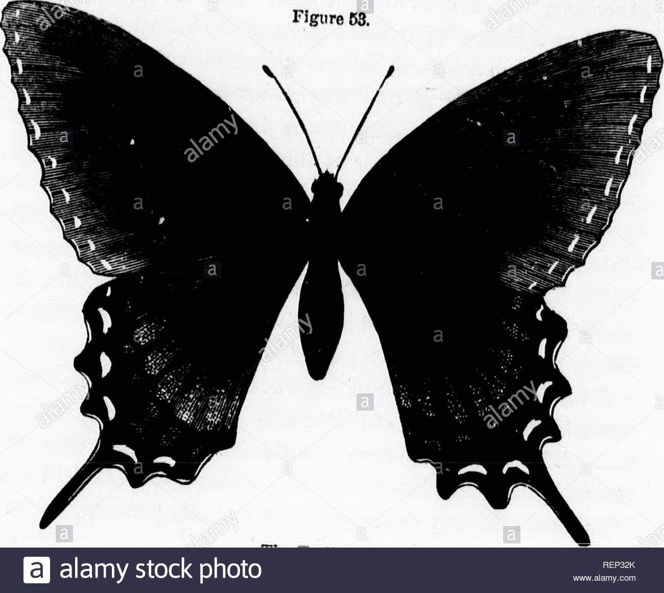 das leben der nordamerikanischen insekten microform insekten insectes ist ich y iii i 1 aos norden amkhican insekten erpillara aus sen cpgs sind veiy schadigenden zu ve tauon und es ist nicht uneo o siehe n je ztzt ty von tl em auf einen einzelnen stamm von earrot oder eelor se lar va werden in der regel unter dem namen petersilie worl bekannt und kann easdy zerstort werden sie sind glatt und eines br ght grune farbe se raupen konnen auch col werden ausgewahlt und ra sed ohne muhe mit der ausnahme dass viele von ihnen 0 s tung von ichneumon wespen kaution in eac ein ei made von rep32k