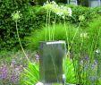 Regenwasserspeicher Garten Reizend Die 328 Besten Bilder Zu Gartentraum