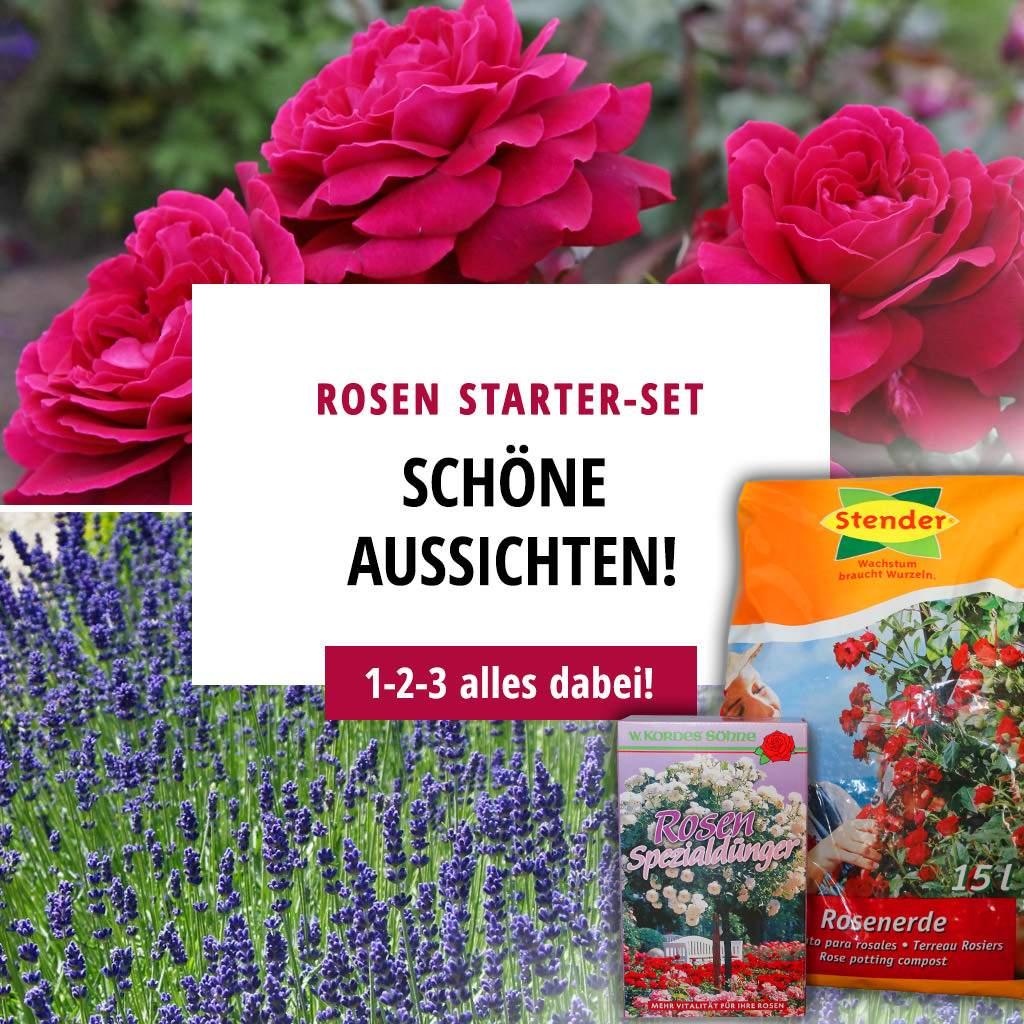 paket rosen starter set 2
