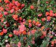 Rosen Garten Luxus Gebrüder Grimm