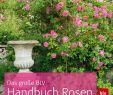 Rosen Garten Reizend Das Große Blv Handbuch Rosen