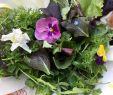 Rosmarin Im Garten Elegant Essbare Blüten Frisch Aus Dem Garten Genießen · Das