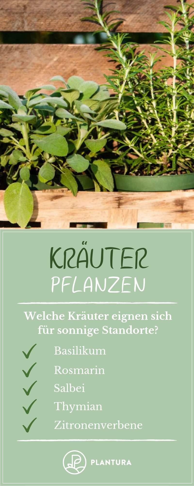 Rosmarin Im Garten Reizend Kräuter Pflanzen Anleitungen & Tipps Für Fensterbrett