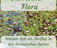 Rostock Botanischer Garten Das Beste Von 310 Pins Zu Deutschland Städtereisen Für 2020