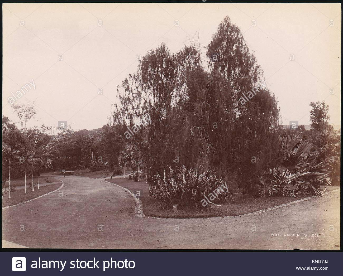 botanischer garten artist unbekannt datum 1860s 70s medium eiweiss silber drucken aus glas negative abmessungen 199 x 272 cm 7 1316 x 10 1116 kng7jj