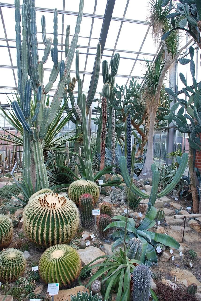cactus house in kiel