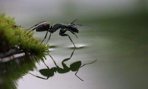 25 Einzigartig Rote Ameisen Im Garten Neu