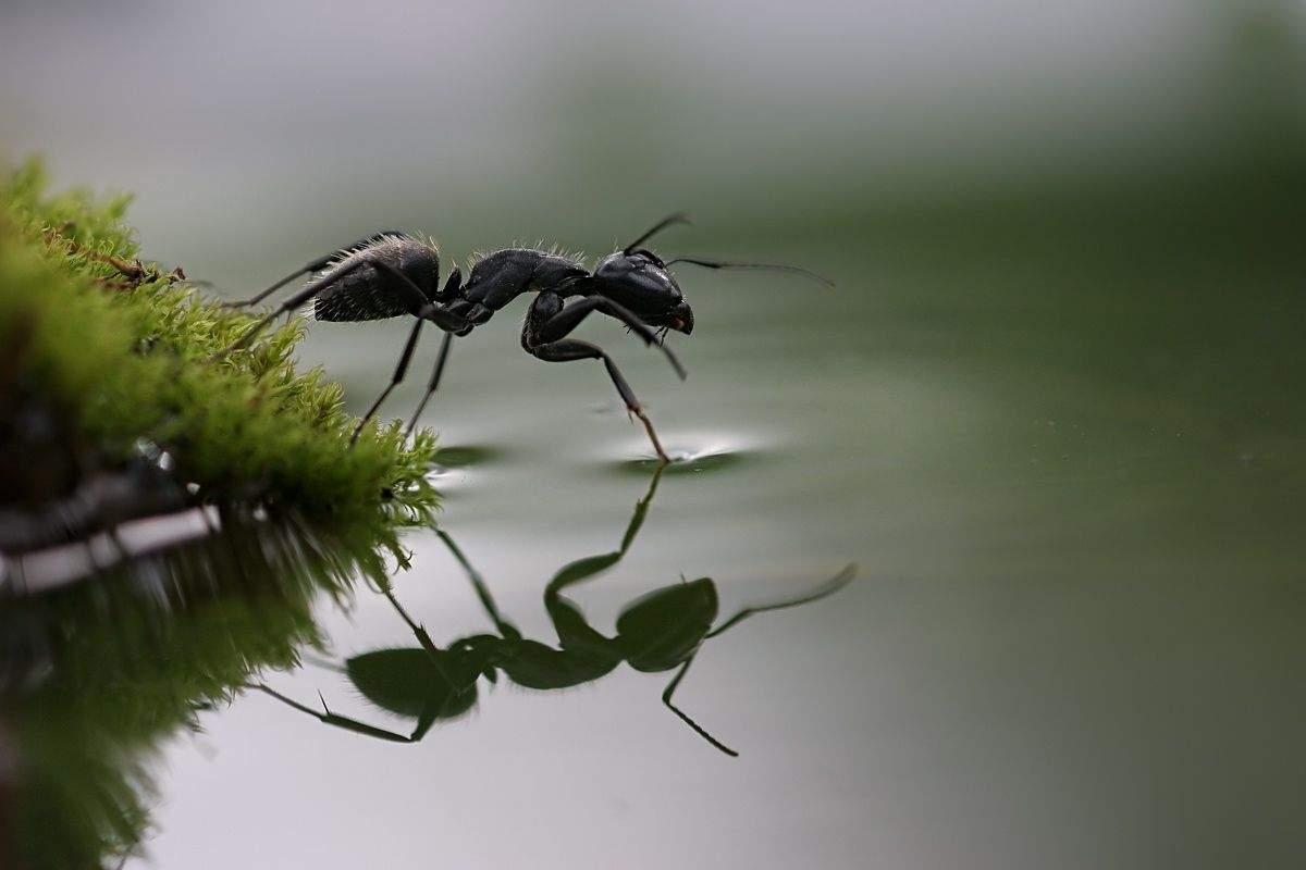 Rote Ameisen Im Garten Elegant Pin Auf Wallpaper