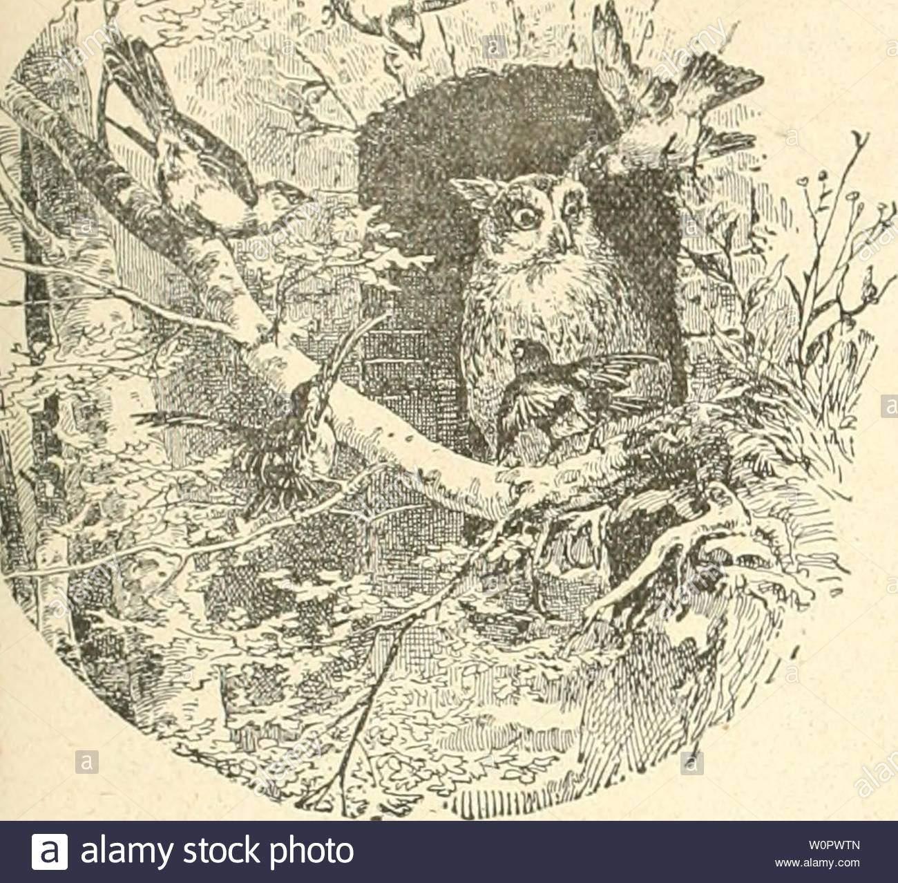 archiv bild ab seite 152 von der ornithologische beobachter 1902 der ornithologische beobachter derornithologisc 01 alas jahr 1902 heft 19 8 mai 1903 jahrgang i j f rnitbologisle cobckbter fur woclieiischrift yogelliebhaber und vogelschutz hir insg g lioii von c daut in bern schweiz oqo erscheint jeden donnerstag xaciilnir mir itil jiii iu iutiiijdhc und eiiiicilhijkiuj ilcr aklorciijcsidllfl ornithologische beobachtungen fur das jahr 1901 von u uaut bern fortsetzung mai in ciuem garten au der ssreiteiirainstrasse wo sich gefleckte amsel gewo w0pwtn