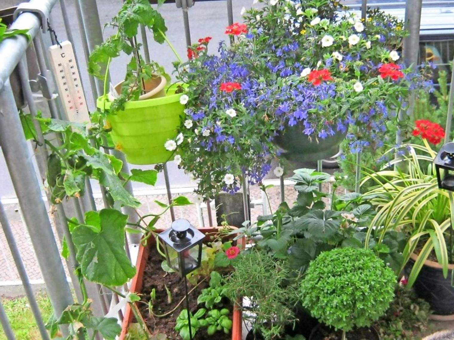 42 luxus hohe pflanzen als sichtschutz grafik hohe pflanzen als sichtschutz hohe pflanzen als sichtschutz 3