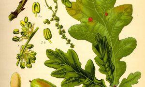 3 Frisch Schädlinge Im Garten Bestimmen Neu