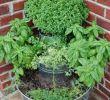 Schaukel Im Garten Das Beste Von 27 Luxus Garten Büsche Schön