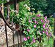 Schaukelgestell Garten Genial Cottagegarden Cottagegarten Landgarten Calibrochoa