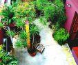Schmaler Garten Neu Best Narrow Garden Ideas Pinterest Side Small Gardens and