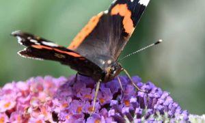 31 Inspirierend Schmetterlinge Im Garten Das Beste Von