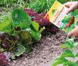 Schneckenplage Im Garten Luxus Schneckenkorn