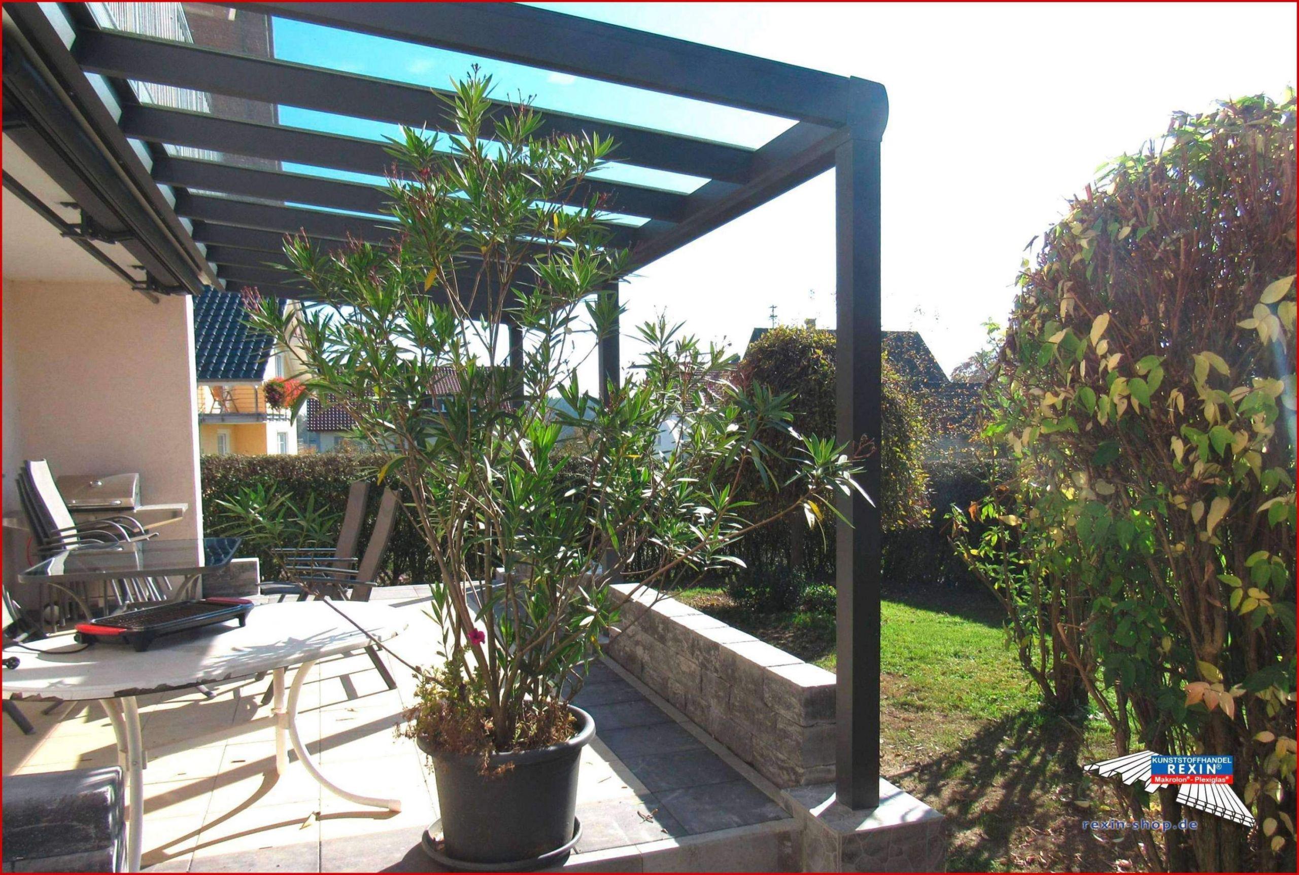 Schöner Sichtschutz Für Den Garten Frisch Pflanzen Als Sichtschutz Im Kübel — Temobardz Home Blog