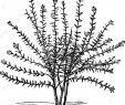 Schrank Für Garten Frisch Buchjahr1868 Stockfotos & Buchjahr1868 Bilder Alamy