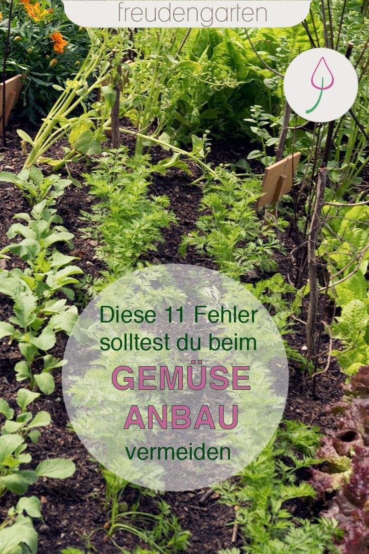 Selbstversorger Garten Anlegen Inspirierend Gemüse Richtig Anbauen
