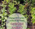 Selbstversorger Garten Das Beste Von Gemüse Richtig Anbauen