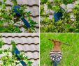 Selbstversorger Garten Inspirierend Fish Eagle Lodge Bewertungen Fotos & Preisvergleich