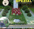 Shop Mein Schoener Garten De Heft Angebote Das Beste Von Mein Schöner Garten Spezial Nr 148 13