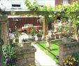 Sichtschutz Für Garten Luxus Sichtschutz Pflanzen Immergrün — Temobardz Home Blog