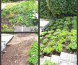 Sichtschutz Garten Ideen Elegant 31 Elegant Blumen Im Garten Elegant