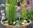 Solar Springbrunnen Garten Genial Make Your Own Balcony Ideas A Mini Pond In the Pot