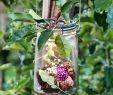 Solarlicht Garten Inspirierend Das Individuell Befüllbare solar Glaslicht ist Das Diy