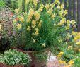 Sommerblumen Garten Einzigartig Natürliche Blütenpracht sommerblumen Für Den Landhausgarten