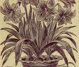 Sommerblumen Garten Neu Childs Seltene Blumen Gemüse & Amp Früchte Für 1894