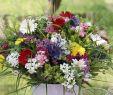 Sommerblumen Garten Neu Frisch Gepflückt – Blumensträuße Aus Dem Garten Gartenzauber