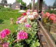 Sommerblumen Garten Reizend Mein Garten – Gesunde Mischung