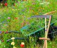 Spaten Garten Inspirierend Pfle Ipps Für Ihre Gartengeräte