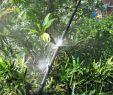 Sprinkleranlage Garten Elegant 50 Stücke Micro Garten Rasen Wasserspray Beschlagen Düse Sprinkler Bewässerungssystem