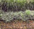 Steinmauer Garten Sichtschutz Einzigartig Steinmauer Bedruckter Zaun Sichtschutz Streifen