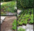 Steinmauer Garten Sichtschutz Gartendekorationen Genial Gartengestaltung Mit Holz Und Stein — Temobardz Home Blog