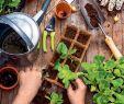 Steinmauer Garten Sichtschutz Gartendekorationen Luxus Baywa Gartenkatalog Kw10 by Russmedia Digital Gmbh issuu