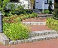 Steintreppe Garten Elegant Pin Von Gartengestaltung Schwegmann Auf Außentreppen