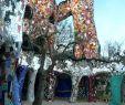 Tarot Garten toskana Inspirierend 59 Best Maremma Images