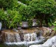 Teich Garten Genial Schwimmteich Und Wasserqualität Im sommer