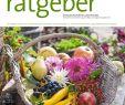 Thomas Philipps Onlineshop De Haus Und Garten Einzigartig Der Praktische Gartenratgeber 10 2019 Pages 1 18 Text