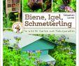 Tiere Im Garten Neu Biene Igel Schmetterling so Wird Ihr Garten Zum Naturpara S