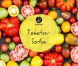 Tomaten Im Garten Elegant tomatensorten Die 60 Besten Altbewährten & Neuen sorten